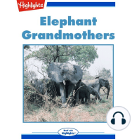 Elephant Grandmothers