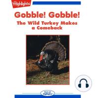 Gobble! Gobble! The Wild Turkey Make a Comeback