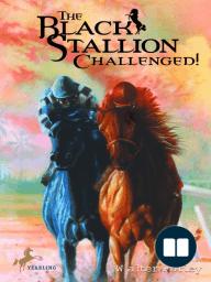 The Black Stallion Challenged