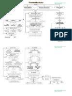 Mapa Conceptual Motricidad