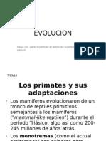 13_evolucion
