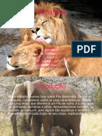 Slides - Mamíferos(1).ppt