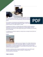 Consejos Para Fotografiar Mascotas