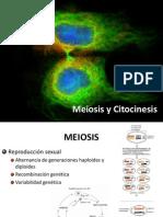 Meiosis y Citocinesis