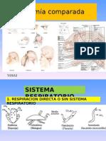 Anatomia Comparada 2012