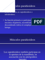 Músculos Parahioideos