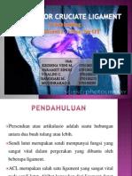 Anterior Cruciate Ligament (2)