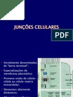 Junções celulares[1]