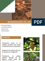 Microbiología del cacao