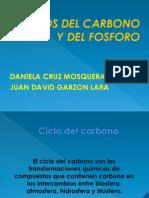 Ciclo Del Carbono Y FOSFORO