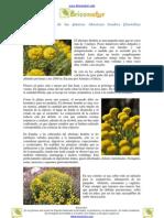Usos medicinales de las plantas