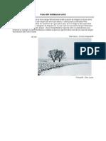 Dinu Lazar - Fotografii de Iarna