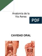Anatom VAS