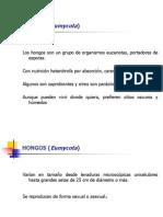 temav-hongos-090722143223-phpapp02