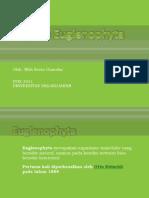 Fhylum Euglenophyta