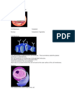 Cell Structure and Histology