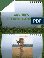 ÁRVORES DO REINO ANIMAL