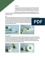 Chrysanthemums Pap