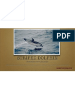 Striped Dolphin Facts