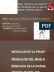 presentación de músculos del miembro inferior