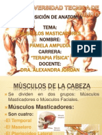 Expocision de Anatomia Musculos Masticadores