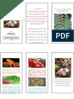 Leaflet Makanan Untuk Meningkatkan Produksi ASI