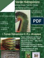 Produccion Forraje Verde Hidroponico Ing. Tarrillo