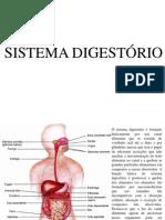 Aula Sistema Digestorio1