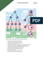 Guía desarrollo embrionarioL1