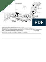 WS Membrana plasmática Work sheet.OK 2010