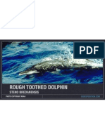 Rough Toothed Dolphin Facts