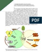 Resumo Aula 3 - Fosforo e Adubacao Fosfatada[1]