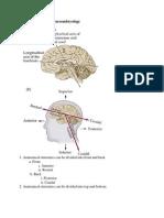 Neuroanatomy and Neuroembryology