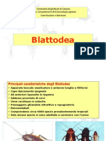 Ord. Blattodea