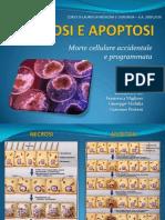 Necrosi e Apoptosi (Francesca Migliore, Giuseppe Mobilia, Giacomo Portaro)