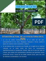 Cultivo de Uva Cascas
