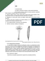 5-Onagraceae