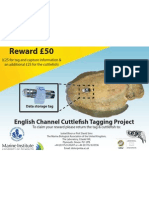 Plymouth Polytechnic Cuttlefish Taging