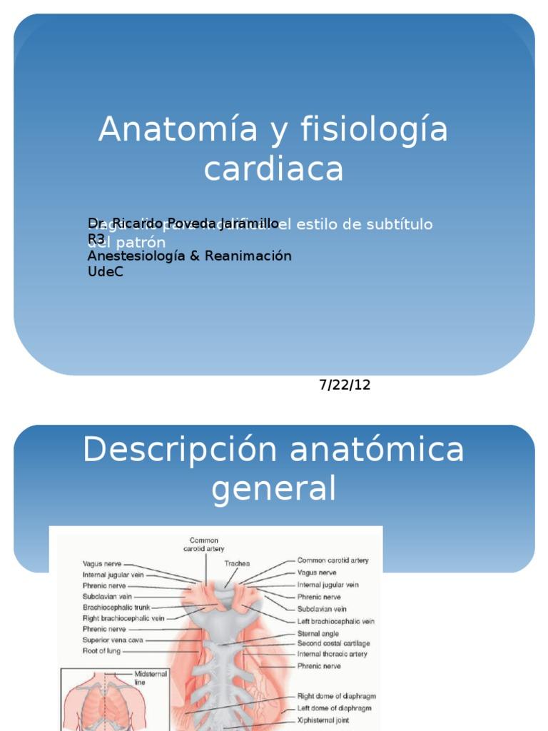 Anatomía y Fisiología Cardiaca