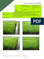 2011DS MET 1-Irrigated - Week 9 (March) ISABELA