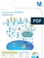 Cancer Apoptosis Poster