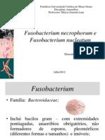 Fusobacterium Necrophorum e Fusobacterium Nucleatum
