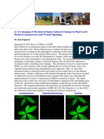 Plant Wound Signals LIGHT and ROS- Dr. Rao Papineni