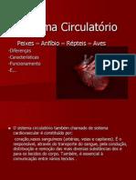 Sistema Circulatório