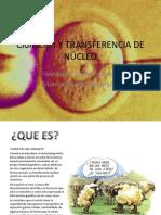 Clonación Y TRANSFERENCIA DE NÚCLEO