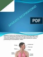 aparatorespiratorio-110614104459-phpapp02