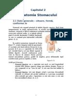 Anatomie stomac