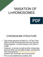 Organisation of Eukaryotic Chromosomes