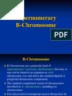 Supernumerary B Chromosome