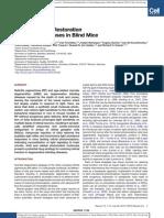Photochemical Restoration of Vision in Blind Mice 2012 July Neuron Cxblindmice Richard Kramer UCB